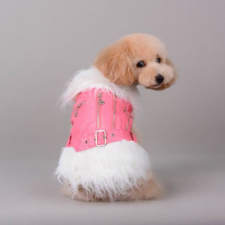 Free Shipping luxury dog costume jacket for dogs chihuahua pitbull poodle yorkie clothe dog pet supplies clothes from china //Price: $11.95 & FREE Shipping //     #hashtag3