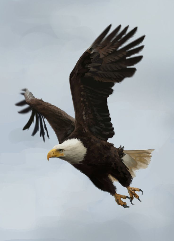 448 best flying eagle images on pinterest bald eagles 448 best flying eagle images on pinterest bald eagles beautiful birds and birds altavistaventures Image collections