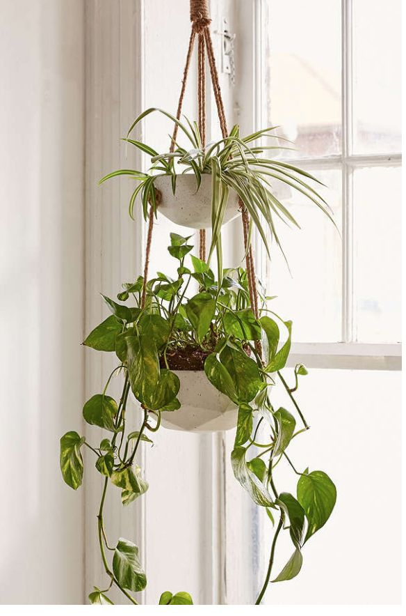 the 25 best indoor hanging planters ideas on pinterest diy hanging planter indoor hanging baskets and hanging succulents