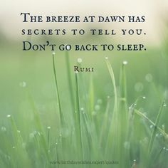 The breeze at dawn has secrets to tell you. Don't go back to sleep. Rumi