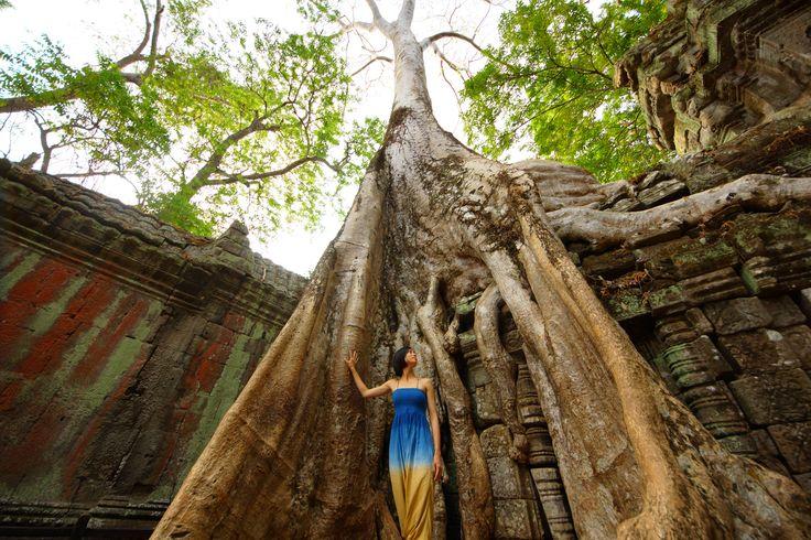 アンコール遺跡 - Ta Prohm - カンボジア   他の寺院では、木は元の建築を復元するために伐採されています。しかし、唯一のタ·プロームは、建築と自然の共存をコンセプトとし、石造りの中に太い幹を覗かせています。In other temples, trees are cut down to restore the original architecture. But only Ta Prohm exhibits the peaceful coexistence of architecture and nature.