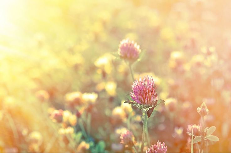 Every season has a unique characteristic that separates it from the others. After the rebirth and growth of spring comes the summer heat, and it can often spell trouble for gardeners who want to grow throughout the year.