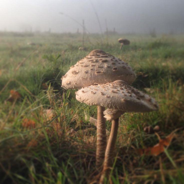 Herfst in aantochtmastbos wanderlust of zenmoment.. | http://trendbubbles.nl/