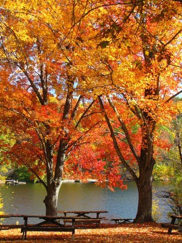 Autumn 2010  Squantz Pond State Park  New Fairfield, CT.