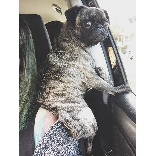solongsolomon: Yes, Barbra, this is a productive way to ride in the car.