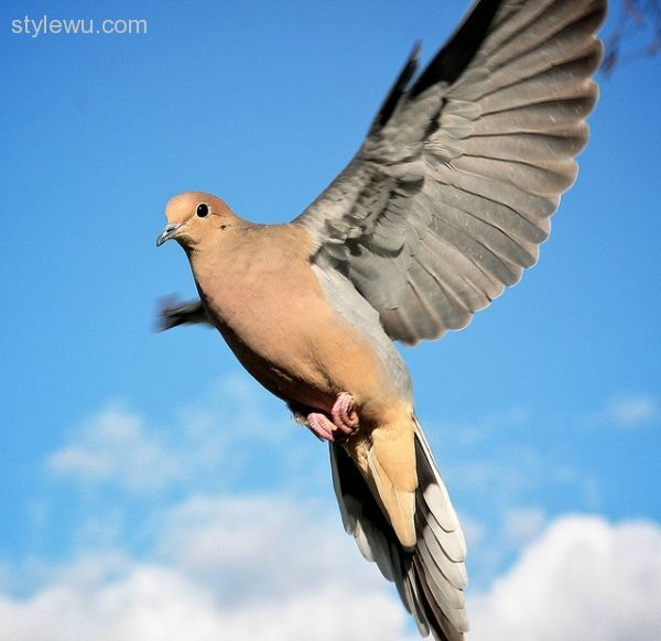 nice 20 Beautiful Pictures of Doves Check more at http://stylewu.com/20-beautiful-pictures-of-doves.html