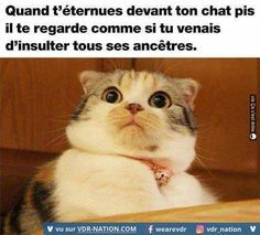 les 25 meilleures id es de la cat gorie chat humour sur pinterest citations chaton m mes chat. Black Bedroom Furniture Sets. Home Design Ideas