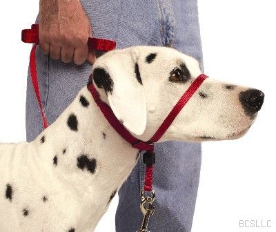 The Gentle Leader is a head collar (not a muzzle) that helps prevent pulling on walks.  Unlike prong collars and choke chains, it does not use pain and fear to encourage loose leash walking.  Rather, it speaks to a dog instinctually.  When the dog pulls on the Gentle Leader, there is slight pressure on the back of there head (where the pack leader would correct them) and on the top of their snout (where their mother would correct them), and the dog instinctively quits pulling.  It's great!