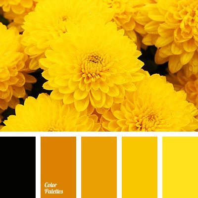 Brown Shades & Color Of Pumpkin. - Monochrome Color Palette - Brown-Red, Color Of Honey, Dark Yellow, Dark Orange, Orange & Yellow Shades , Red-Brown Color.
