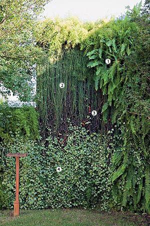 """Samambaias (1), ripsális (2), columeias (3) e peperômias (4), todas pendentes, parecem cair como água pelo muro de 13 x 4 m. Não bastasse esse efeito, visto de longe, é como se o jardim não tivesse fim. """"As espécies de meia-sombra foram inseridas em uma estrutura metálica com jardineiras removíveis para facilitar a conservação"""", explica a paisagista Claudia Diamant."""