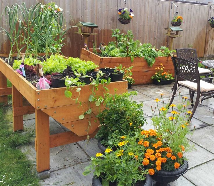 104 best images about containers on pinterest container for Easy plants to grow in pots outside
