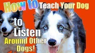 Zak George's Dog Training rEvolution - YouTube
