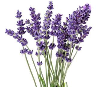 Cantik Organik: Aroma Terapi Untuk Pengobatan