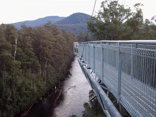 Tahune Airwalk, Huonville, Tasmania - averages 20-30m above the forest floor with the cantilever some 50m above the river