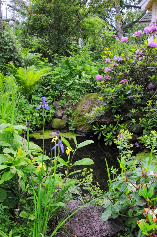 14 best images about pond ideas on pinterest gardens for Natural pond plants