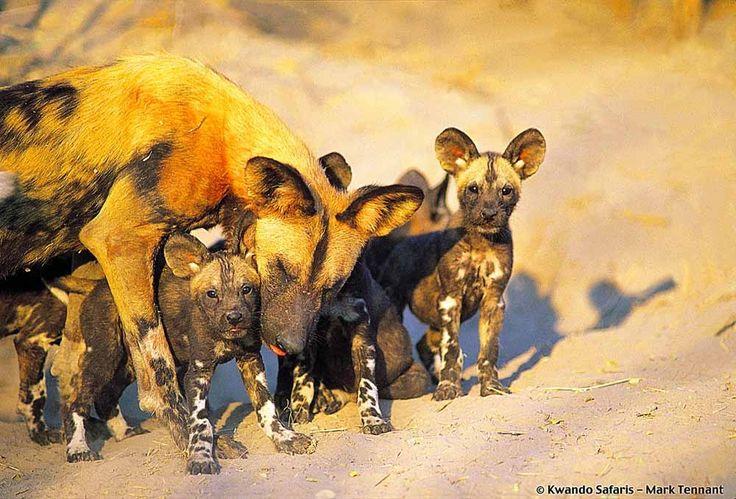 Botswana Holidays Gallery Image 3