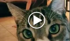 Funny Video of Cats Interrupting Yoga http://www.doyouyoga.com/video-of-cats-interrupting-yoga-33736/ @doyouyoga