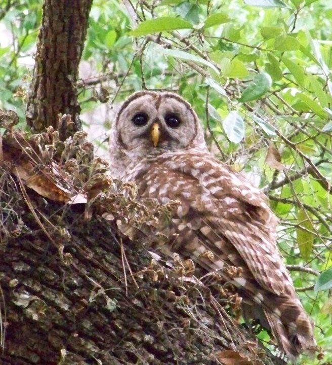Owl Creek Happenings Tumbleweed Traveling: 73 Best Kissimmee Outdoor Adventures Images On Pinterest