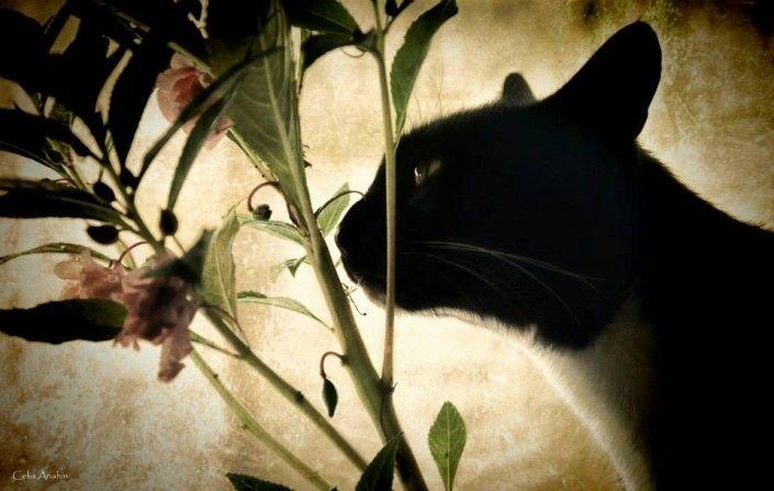 Ficção e veracidade em O gato e o escuro,  de Mia Couto, artigo de Vera Lúcia López de Oliveira Cutolo