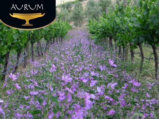 Meet the Aurum Winemaker. Daily for the duration of the Down to Earth Wine Celebration. Starting 24th October. We would like to offer a personal appointment with our winemaker. The tour will take visitors to the vineyard to talk about our organic practices, to the winery and end with a private tasting of a selection of our wines, including older vintages and/or barrel samples.