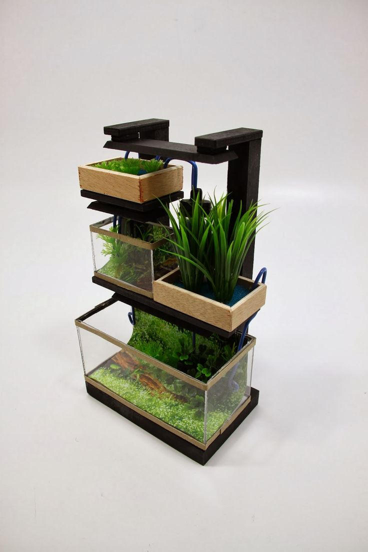 56 best images about mini aquaponics on pinterest for Fish tank hydroponic garden