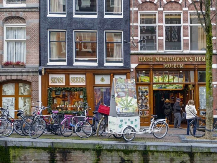 netherlands-government-manipulated-cannabis-research