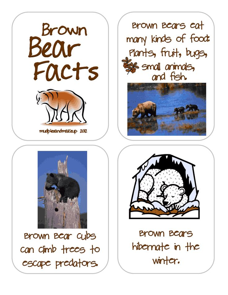 brown bear facts for kids | Kids - photo#29