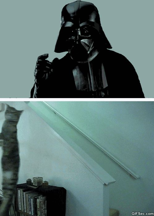 darth vader and his cat gif wwwgifseccom star wars