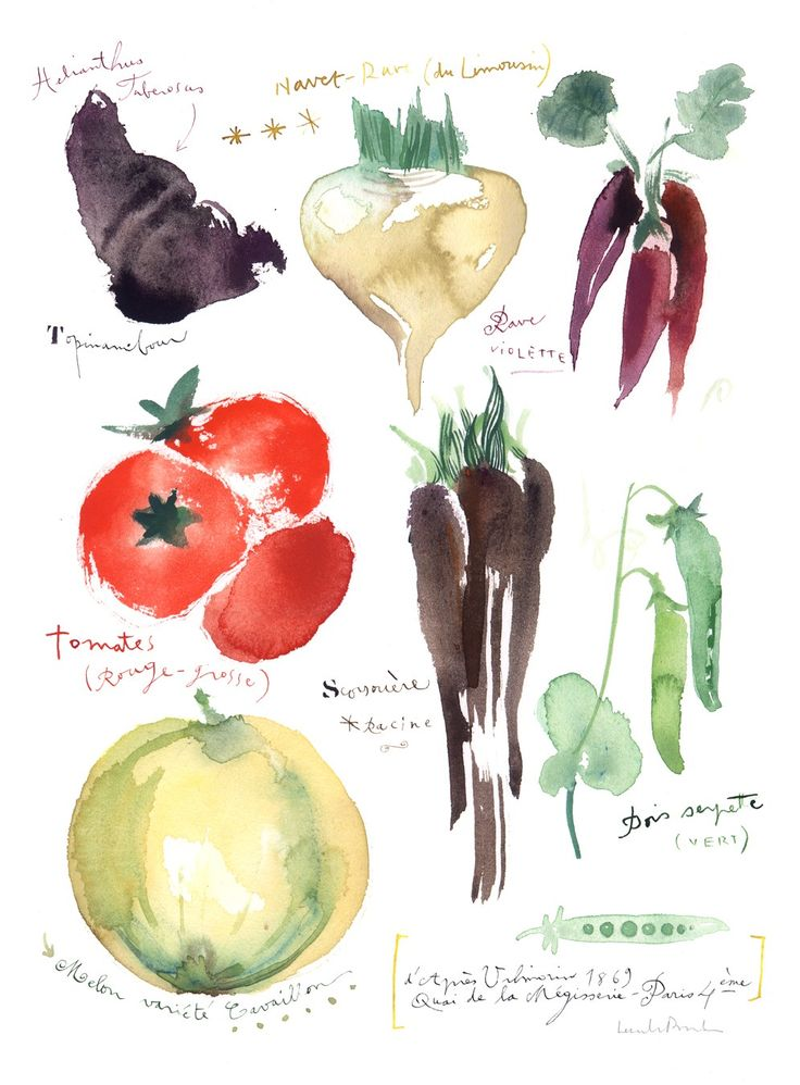 Art for kitchen, Antique vegetables, 8X10 print, Watercolor painting, food poster. $25.00, via Etsy.
