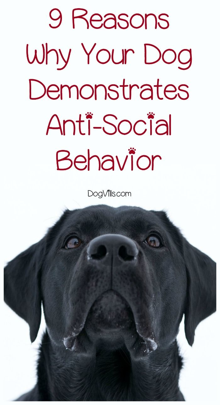 Why did your social butterfly pooch suddenly become a wallflower? Here are 9 possible reasons why your dog is demonstrating anti-social behavior & what to do about it!