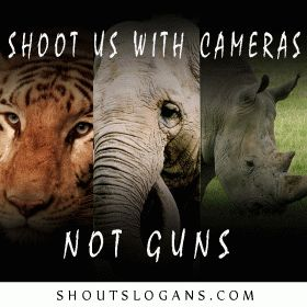 Save Animals Slogans and Sayings