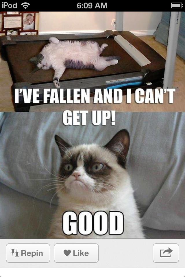 Ha Ha Ha stupid cat Funny grumpy cat memes, Grumpy cat
