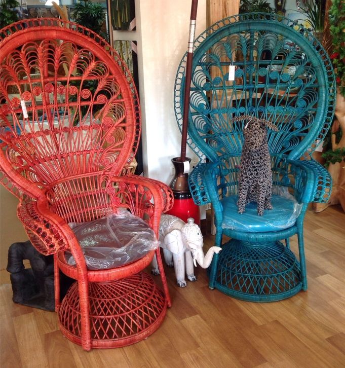 Peacock Chairs, and a dog
