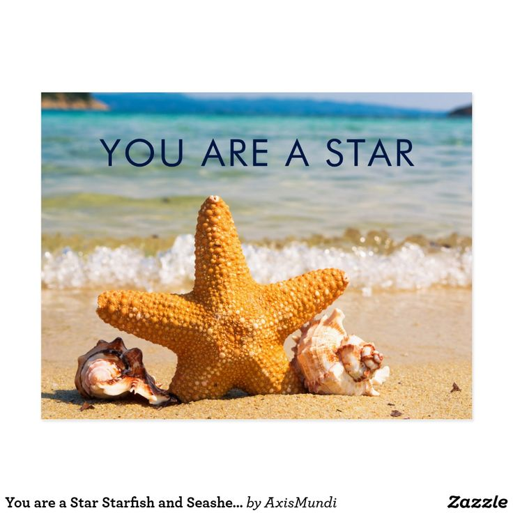 You are a Star Starfish and Seashells on the Beach Postcard