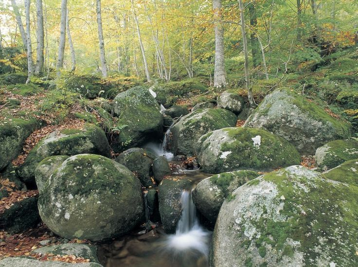 Parc Natural del Montseny - The Montseny massif, declared a World Biosphere Reserve by the UNESCO, is the highest massif of the Pre-littoral mountain range comprising: the Turó de l'Home crest (1,706 metres) and Les Agudes (1,703 metres), the Matagalls (1,697 metres) and the Pla de la Calma (Puig Drau, 1,344 metres) #bcnmoltmes #CostaBarcelona #VallesOriental #mountain #hiking #trekking #trail #nature #wild