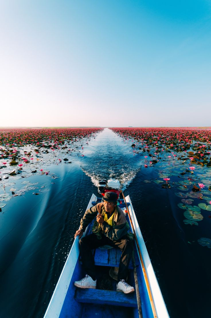Lotus Sea, Thailand . Lordy I'm finding you