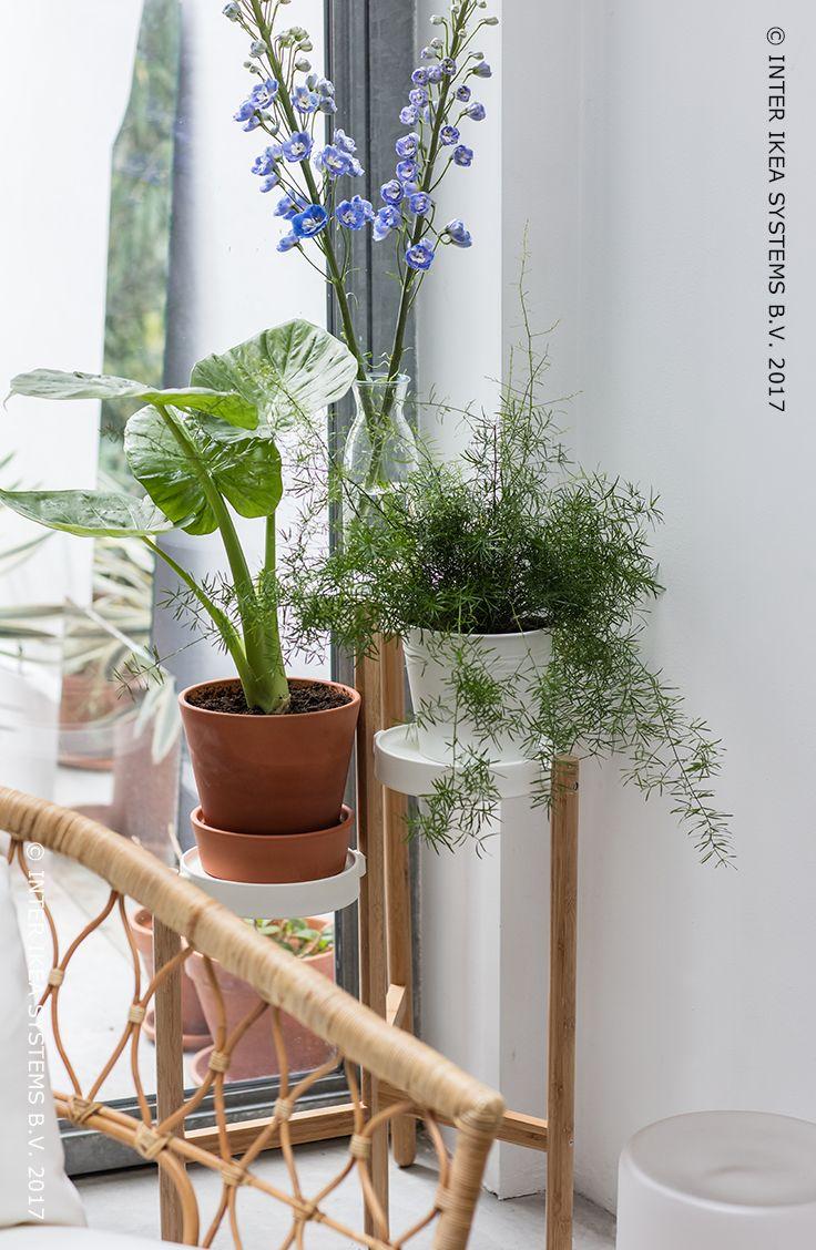 echelle pour plantes fashion designs. Black Bedroom Furniture Sets. Home Design Ideas