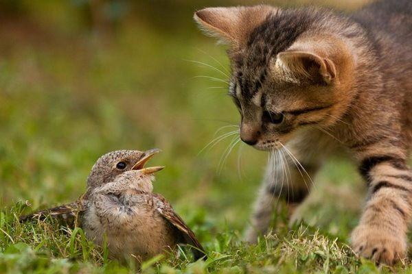 Прикольные фото животных ) | Кошки и котята, Самые милые ...