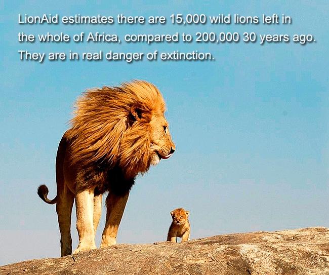 So sad, http://www.lionaid.org/