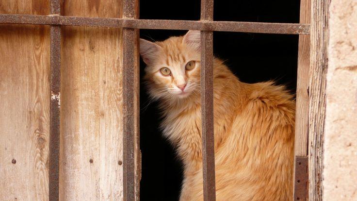 Cat in Benidoleig