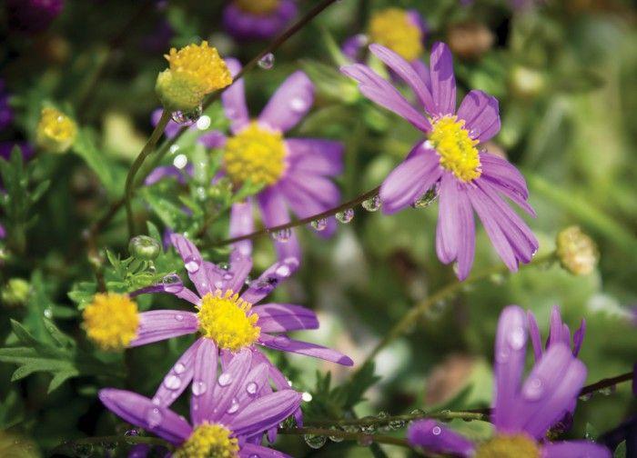 Flower drops by www.minorpostcards.fi