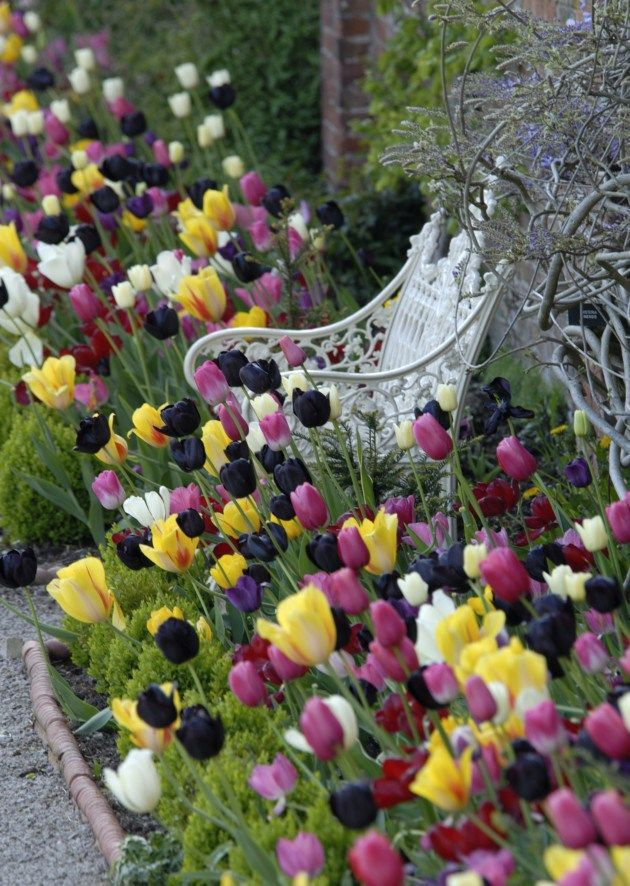 A riot of colours in this border of Tulips, but some how they all look good together