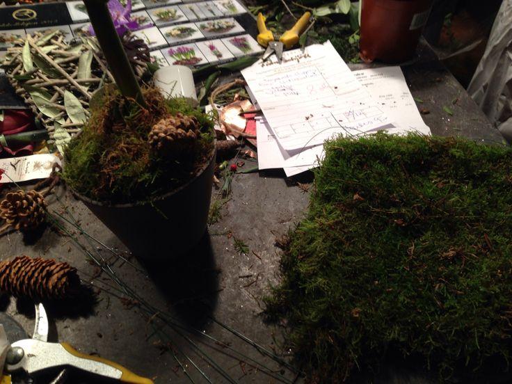 Sette grass i plante
