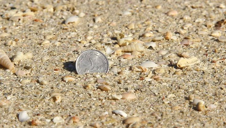 One dirham coin stick out wet sand, extreme close up beach view. Wave quickly move and wash out area. Bright sun light, shells cracks around, rough grainy sand of Persian Gulf - HD stock video clip
