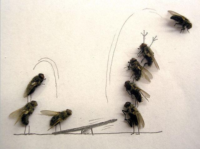 dead_flies_art