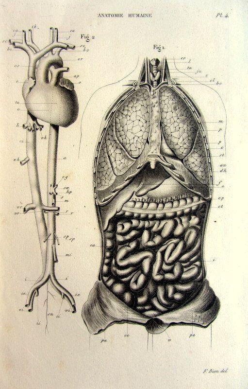 1852 Système digestif respiratoire circulatoire de lanatomie humaine antique imprimer, intestin des poumons coeur vintage gravure, plaque du