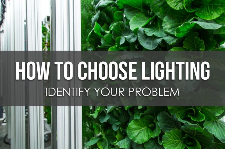Before you start to choose lighting for your farm, know your problems. These could include not just providing light, but budgeting and heat generation.