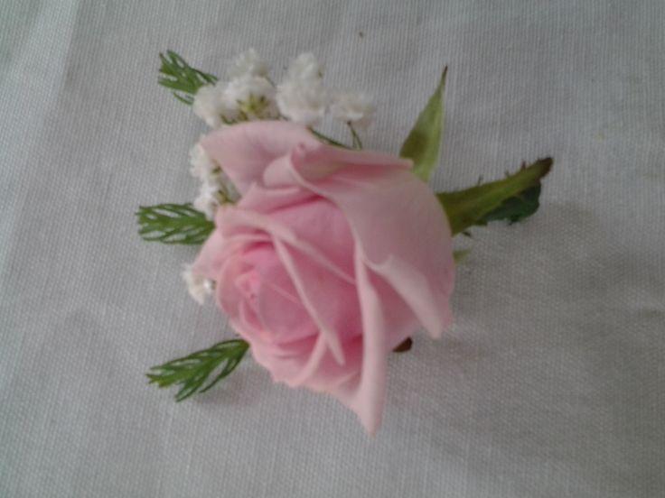 Pink rose and gip