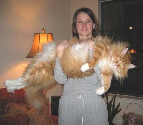 Big Cat!