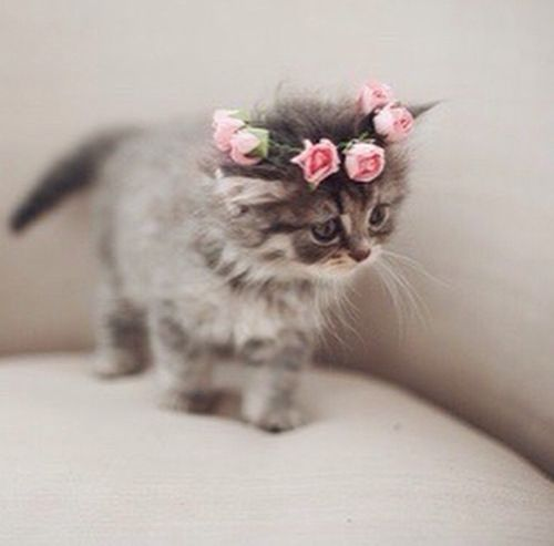 The tiny flower princess kitten ........